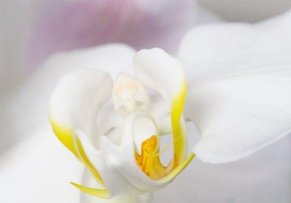 floral room flower